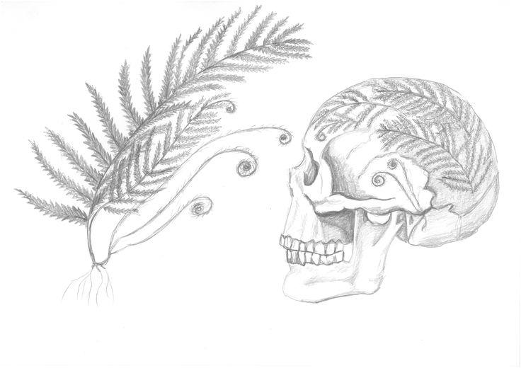 czacha, anatomia #mskpu