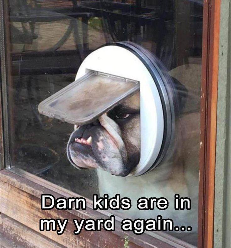Funny animal picture 25 pics