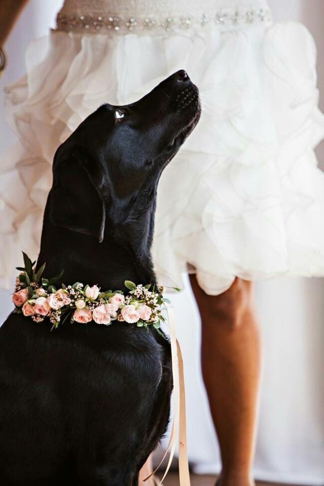 Wedding day with your dog