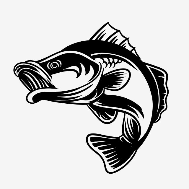 Fishing Lover Detail Bass Fish Vector Illustration Bass Fish Fishing Png And Vector With Transparent Background For Free Download Fish Vector Silhouette Vector Vector Illustration