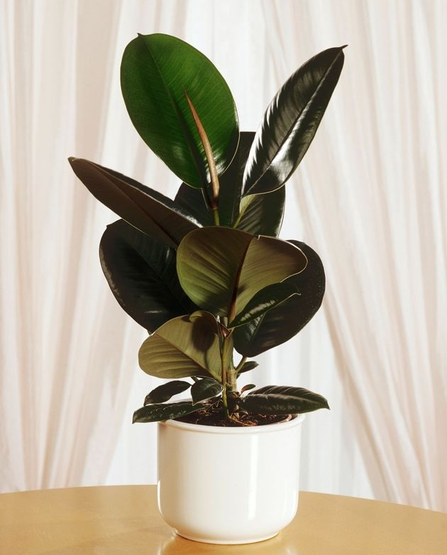 Fill your home with oxygen: 5 best flowers for air purification In your house, whether old or new, toxins pile up. They are in plastics, carpets, furniture