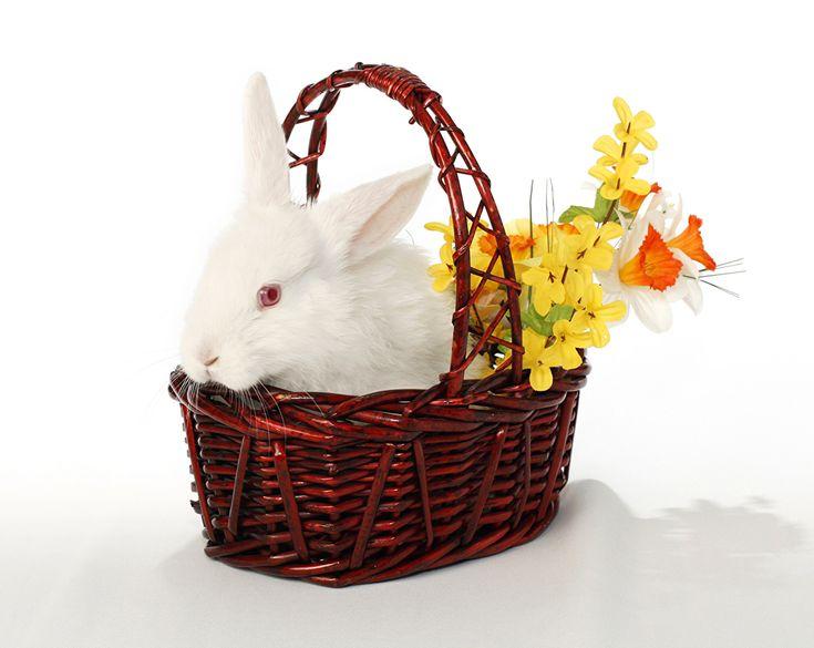 Conejo Narcissus Cesta de mimbre Animalia