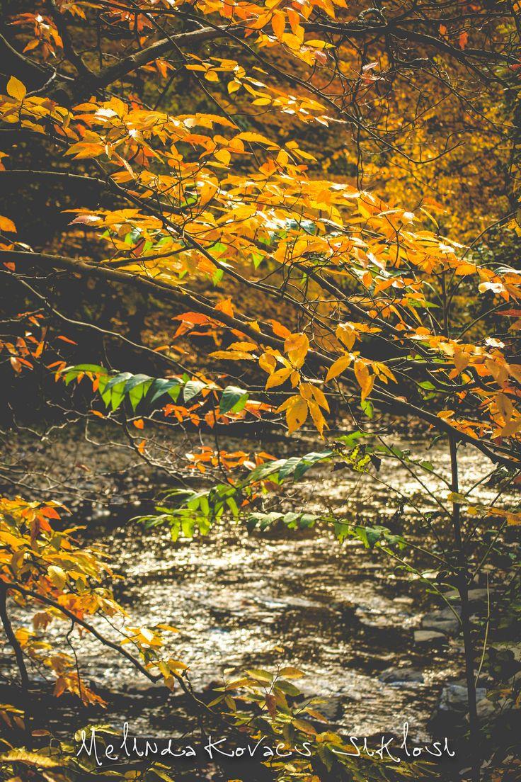 https://flic.kr/p/A4QMez | Autumn