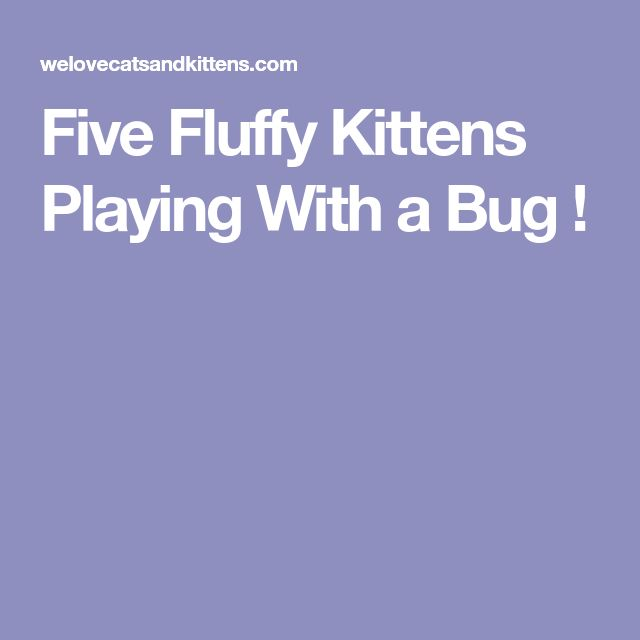 Five Fluffy Kittens Playing With a Bug !