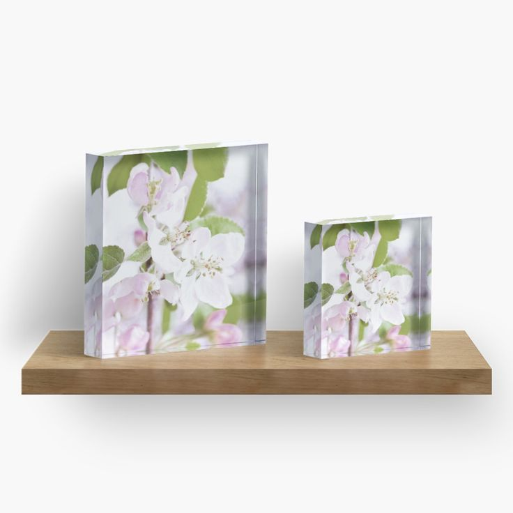 Apple Tree Blossoms Acrylic Block by ARTbyJWP from Redbubble #acrylicblock #walldeco #artprints #buyart #floral #blossoms --   Close-up of beautiful apple tree blossoms. • Also buy this artwork on phone cases, apparel, stickers, and more.