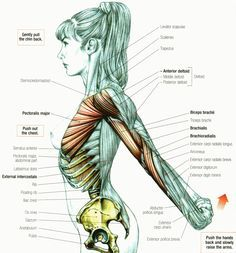 Stretching: How to Stretch the Anterior Deltoid #muscle #exercise