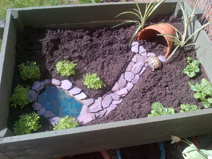My sis, Jen, should do this for her turtles