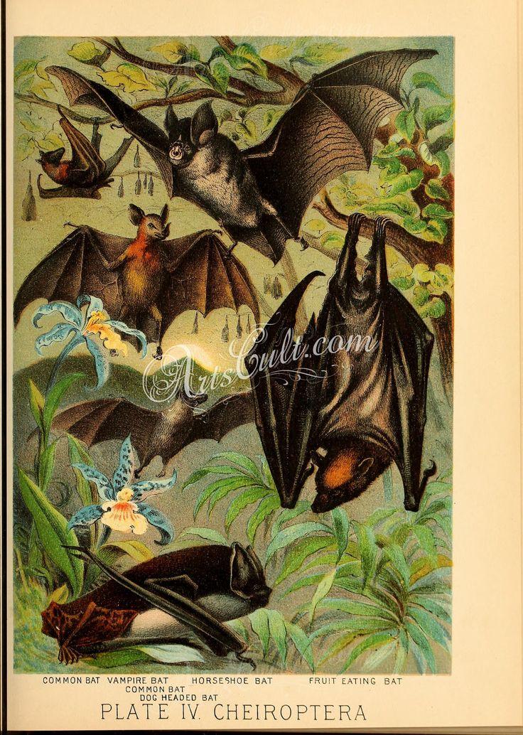 Common Batm Vampire Bat, Dog Headed Bat, Horseshoe Bat, Fruit Eating Bat   ...