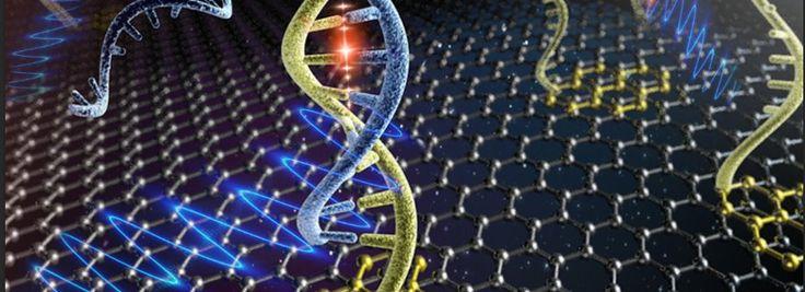 Graphene sensors detect HIV DNA - Phys.Org