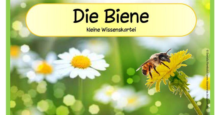 Wissenskartei_Biene.pdf