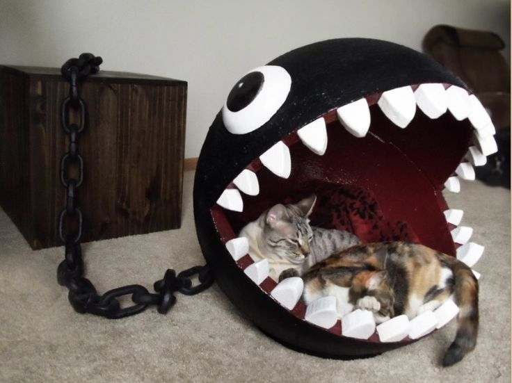 open mouth cat bed