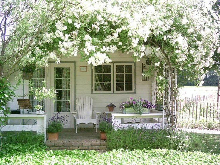 The pretty white flowers in the summer that entwine the little white house.............