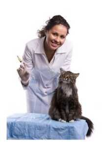 Are you right for a Veterinary degree? The field of veterinary medicine comprises professionals who work on behalf of the health and welfare of animals. To study animal medicine, students should attend veterinary school. Veterinary schools offer various degrees and certificates depending on their programs and requirements. Get more info here! #VeterinaryCareers