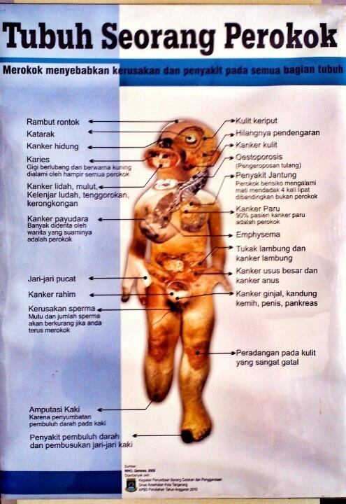Smoker body