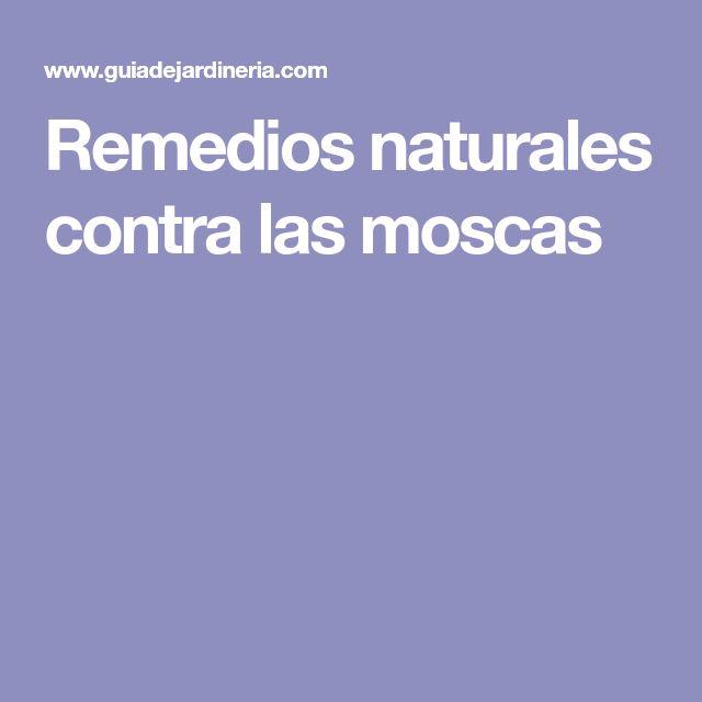 Remedios naturales contra las moscas