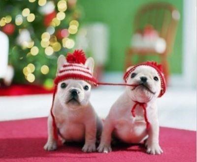 Gorro Natal Cachorro