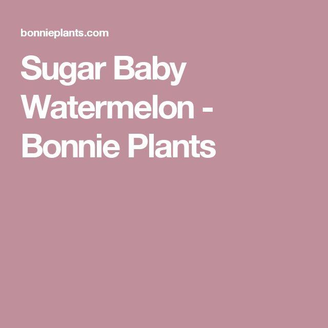 Sugar Baby Watermelon - Bonnie Plants