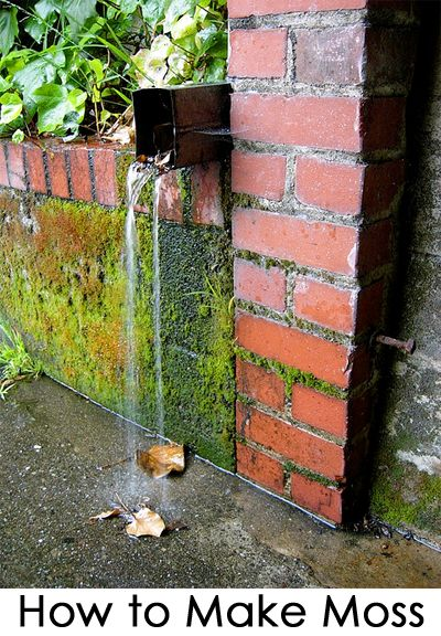 Moss adds instant age to new things by giving them a time worn patina. Growing moss is very popular in a garden on waterfalls, rocks, statues, terracotta pots, bricks, bolders, and almost anywhere that is moist and shady. If you want to give something in your garden more character, consider growing moss. See the steps below for how to grow moss.