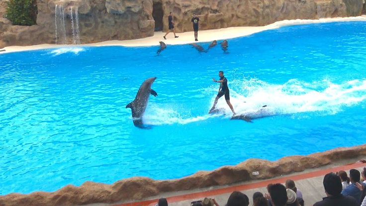 Loro Parque Dolphin Show  -The best  5 minutes | 4K Ultra HD