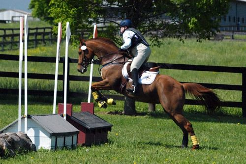 Chestnut Thoroughbred Mare, Eventer Jumper Sport horse Broodmare Prospect in Kentucky. DreamHorse.com is the premier horse classifieds site with horses for sale, lease, adoption, and auction, breeding stallions, and more.