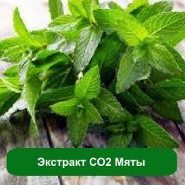 Косметические, парфюмерные и лечебные свойства СО2 экстракта мяты. Применение мятного экстракта в пищевой промышленности