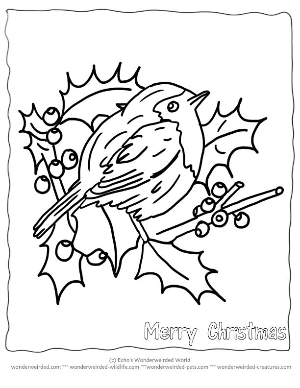 free printable christmas coloring pages birds echos christmas birds at wonderweirded wildlifecom - Christmas Coloring Book Printable