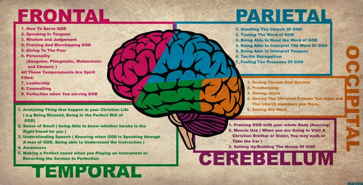 Image for Human brain anatomy diagram