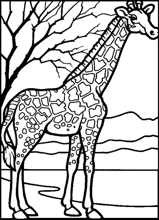 Kleuterdigitaal kp giraffe 02 dierentuindieren for Coloring pages giraffe