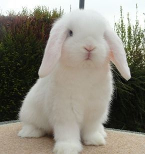 Pure white rabbits are my favourite farm animals they are so cute and cuddly