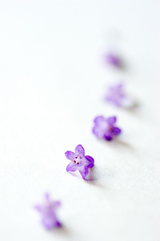 1081 best plum  aubergine  purple images on pinterest