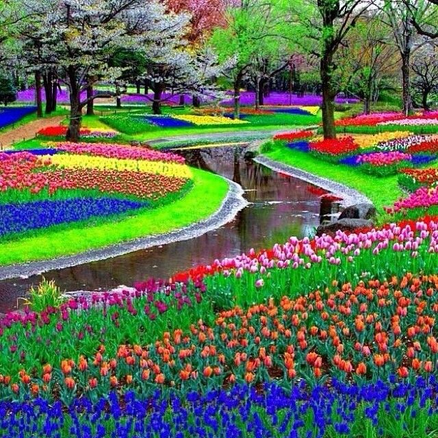 earthpix Keukenhof, also known as the Garden of Europe, is the world's second largest flower garden. It is situated in Lisse, the Netherlands #EarthPix