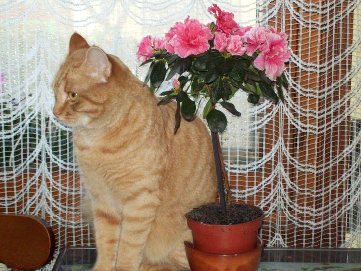 il gatto e l'azalea