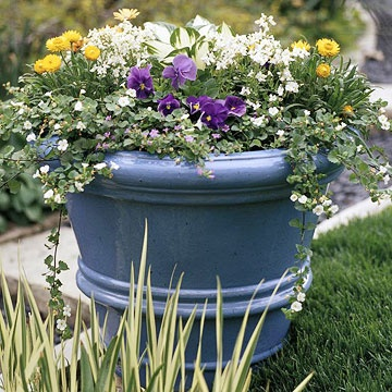 Incorporate Perennials.  Don't be afraid to incorporate perennials into your spring containers. Then plant the perennials in your garden once the annuals start to fade. Here, for example, bacopa, purple pansy, white nemesia, and yellow strawflower mix well with 'Fire and Ice' hosta.  Hint: Growing hostas and other perennials in tall containers can help protect them from hungry rabbits early in the season.Creamy Yellow, Annual Fade, Hungry Rabbit, Blue You, Plants Gardens, Incorporated Perennials, Growing Hosta, Container Gardening, Container Flowers