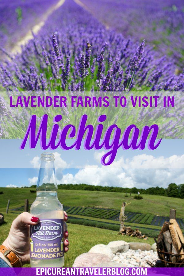 8 Beautiful Lavender Fields You Must See In Michigan With Images