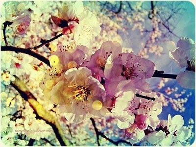 <3: Nature, Color, Beautiful, Things, Flowers, Spring, Photography, Cherry Blossoms