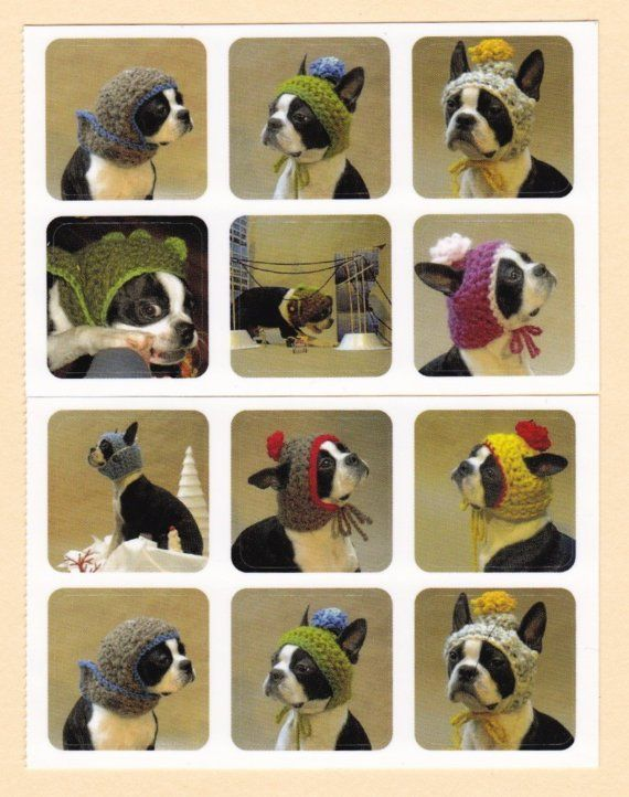 Bean Town Handmade. Awesome model!Dogs Head, French Bulldogs, Crochet Hats, Beans Town, Hats Stickers, Boston Terriers, Knits Hats, Mr. Beans, Town Handmade