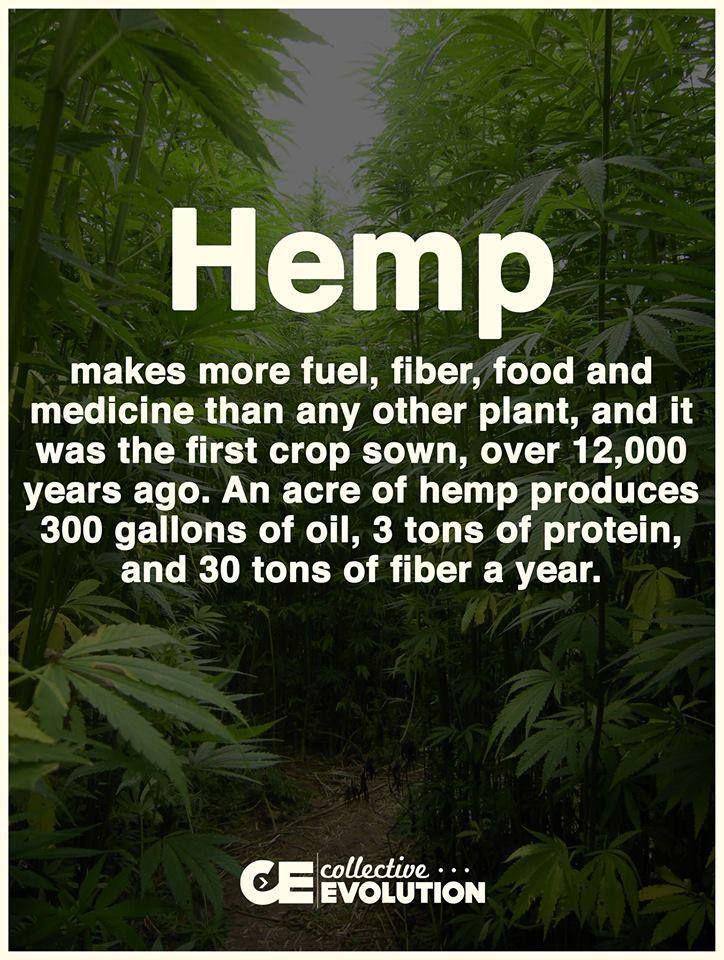 Legalize hemp to reduce deforestation