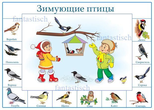Плакат для дошкольника - Зимующие птицы   А3, А4 / 300 dpi / 29.1 мб   Составитель: fantastisch     Скачать с turbobit