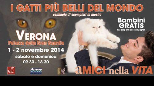 """Sabato 1 e domenica 2 Novembre, in esposizione a #Verona i gatti più belli del Mondo nell'ambito della rassegna """"Expo Felina"""" @gardaconcierge"""