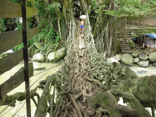 The Unique bridge from Indonesia made by root #indonesia #unique #article #blogger #travelblogger #nature #natural #landscape #photo #photographer