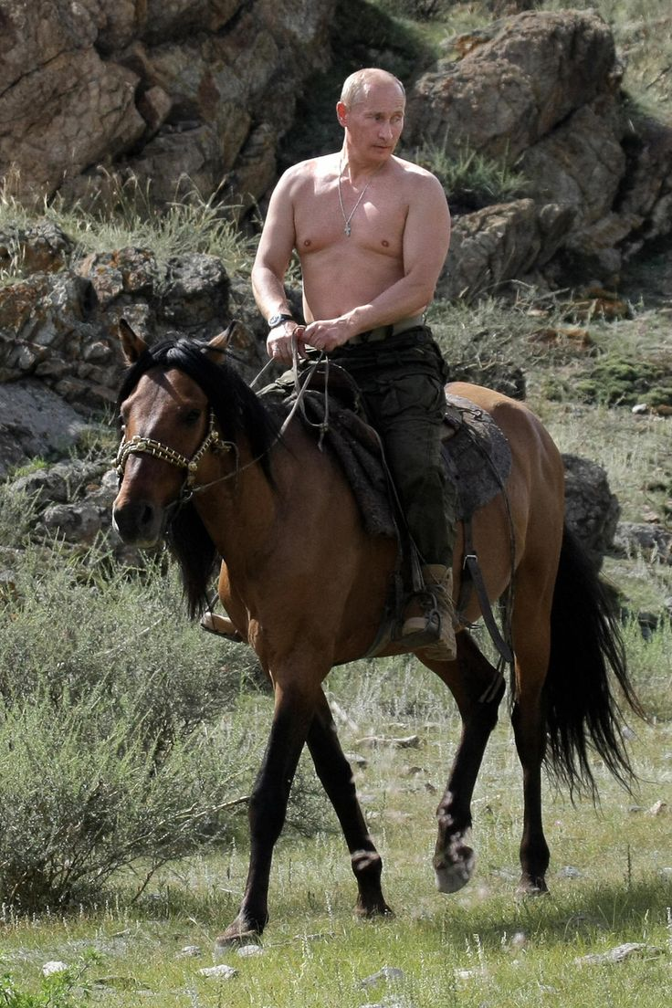 http://pinterest.com/pin/7248049376738485/ Shirtless Vladimir Putin, riding a horse.