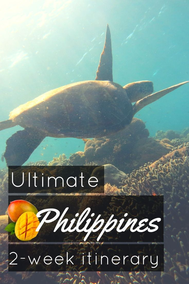 Island Hopping and Scuba Diving in the Visayas in the Philippines. The Ultimate 2-week itinerary to travel in the Philippines, island hopping and scuba diving - World Adventure Divers #underwater #underwaterphotography #uwpics #snorkeling #snorkel #snorkelingtrip #scubadiving #scubadive #philippines #visayas #itinerary #islandhopping #scuba #dive #diving