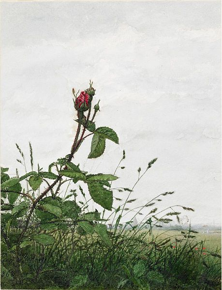 File:Léon Bonvin - Rose and Grasses - Walters 371530.jpg