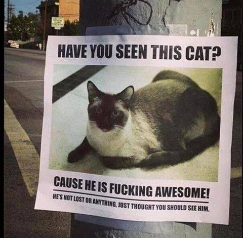 hahaha CAT | Crazy humor & memes | Pinterest