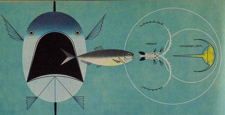 Illustration by Charley Harper #illustration #animal #geometric #vintage #fish #texture