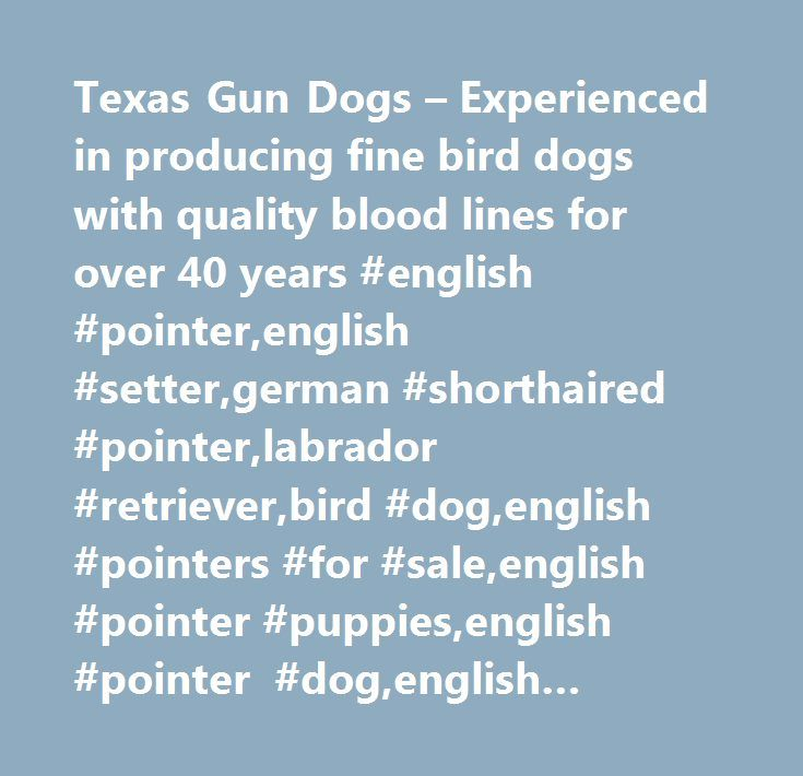 Texas Gun Dogs – Experienced in producing fine bird dogs with quality blood lines for over 40 years #english #pointer,english #setter,german #shorthaired #pointer,labrador #retriever,bird #dog,english #pointers #for #sale,english #pointer #puppies,english #pointer #dog,english #pointer #breeders,pointer #pup,pointer #for #sale,bird #dogs #for #sale,elhew #pointer,setters #for #sale,retrievers #for #sale,force #broke #retrievers,natural #retrievers,trained #pointer,pointer #bird #dog,started…