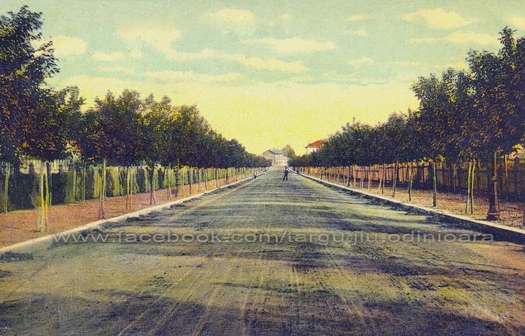 Targu Jiu - B-dul I.C.Bratianu la inceputul secolului trecut , ( actuala Republicii ) . In centrul imaginii se vede in fundal vechea cladire a garii