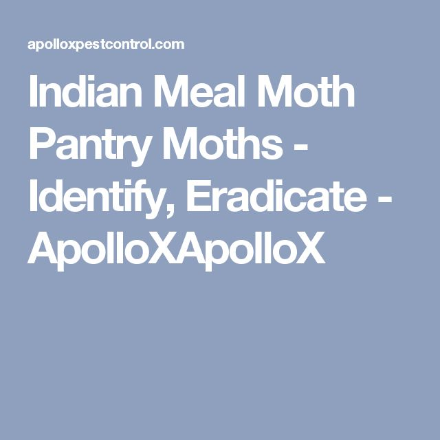 Indian Meal Moth Pantry Moths - Identify, Eradicate - ApolloXApolloX
