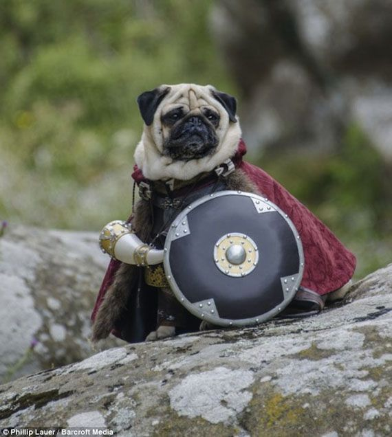 Pugs dressed as LOTR characters. Somebody has WAY too much time on their hands.