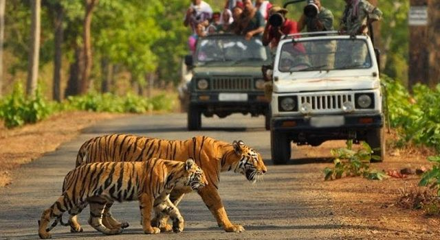 What Activities We Can Do In Jim Corbett Complete Information